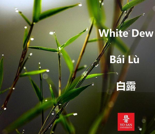 White Dew Bái Lù 白露
